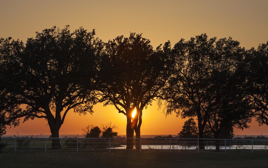 sunset treeline frisco texas beautiful sunset in