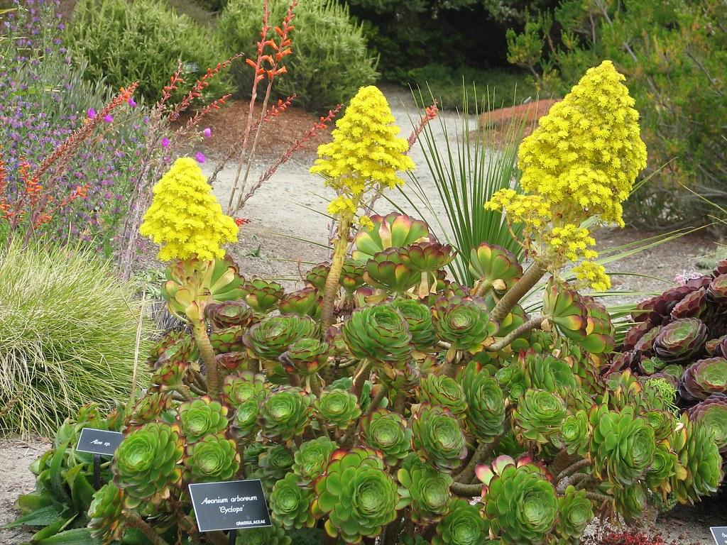In the cactus garden at mendocino coast botanical - Mendocino coast botanical gardens ...