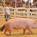 """Some Pig"""