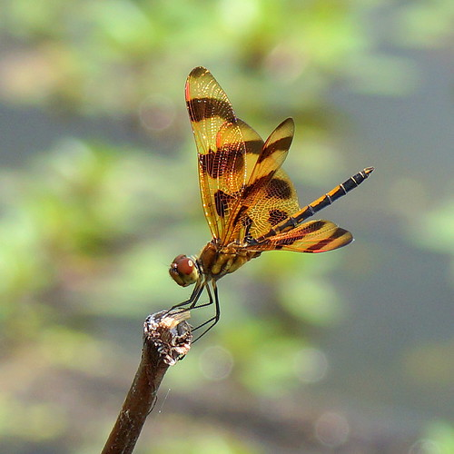 halloween pennant | by aokcreation