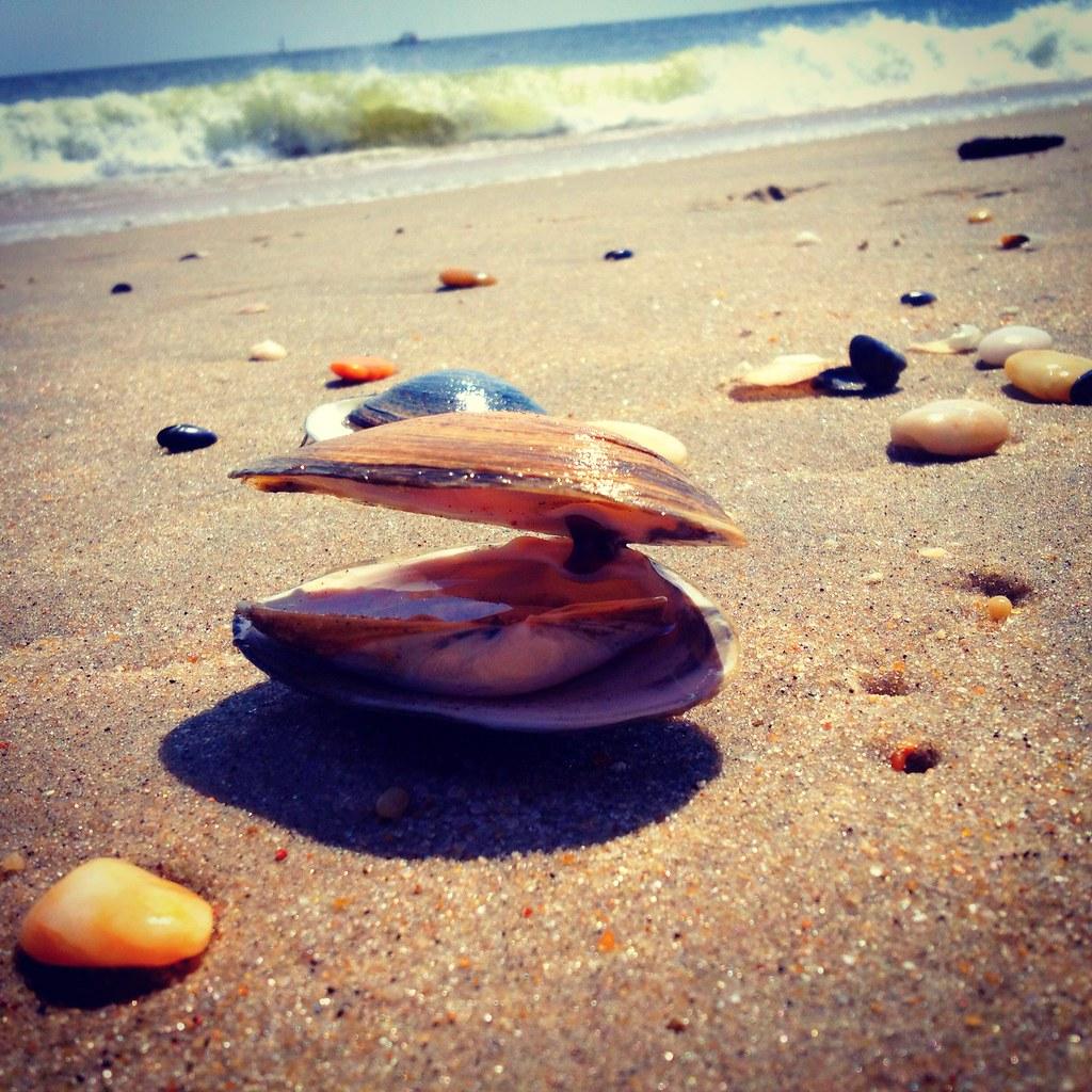 Iphone Instagram Photo Gunnison Beach Sandy Hook Nj Shel