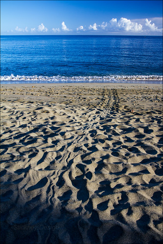Turtle Tracks on Turtle Beach | by LifeLover4