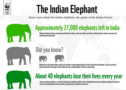 Infographic: The Indian Elephant | by WWF - Global Photo Network
