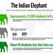 Infographic: The Indian Elephant