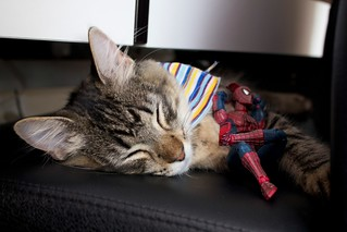 Willow and Spidey Taking a Break | by Gavin St. Ours