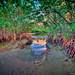 Mangrove-Trees-at-Dubois-Park-in-Jupiter-Inlet-Florida