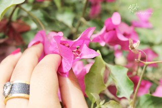 Flowers | by ANFAL ALDOUSARI