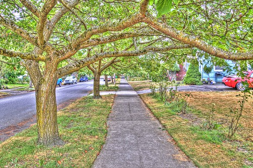 Tree Lined Streets in The Hood | by Mule67