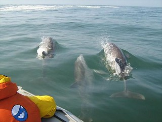 Bottlenose dolphins - Whale and dolphin watching in Peru with Nature Expeditions 18 | by stefanaustermuhle