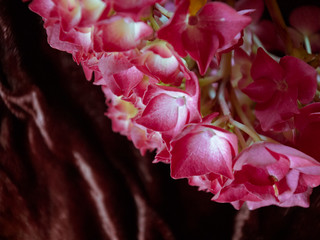 Close to a pink hydrangea | by Su55