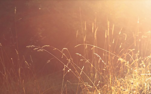 """we are but a moment's sunlight, fading in the grass"" ~ the youngbloods. 