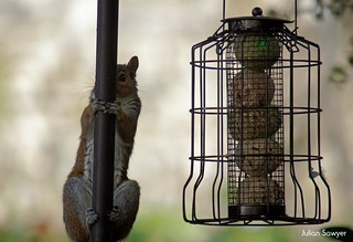 Nope, No Squirrels Here! | by julian sawyer - Purbeck Footprints