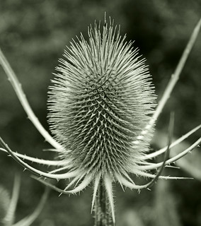 Spikey | by Bruus UK