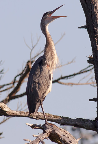 Heron in Point Pleasant Park | by r-91