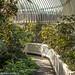 Botanic Gardens in Glasnevin (Dublin)
