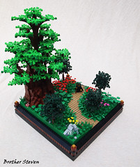A Walk in the Forest. by Brother Steven