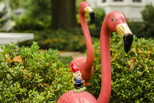 Cedric the Flamingo Whisperer | by Rob Swatski