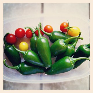 10 jalapeno peppers and 8 tomatoes | by jacob earl