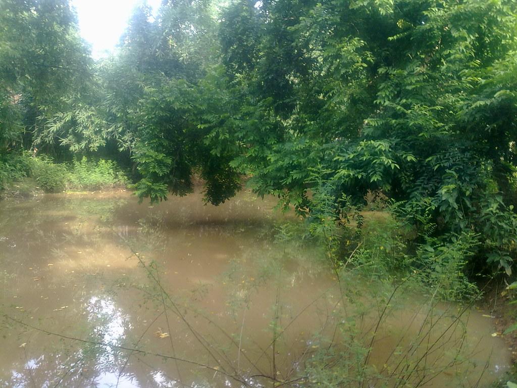 Rainy Season Water On Village Lake Hd Image Photo Ghoragh