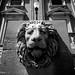 Lion Radar
