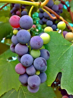 Autumn with grape flavor | by Ramona Raican - Visual Metaphors