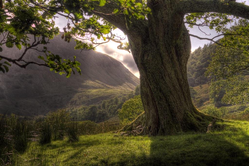 Twisted Old Oak Tree | SAM MASON | Flickr