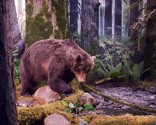 Forest diorama with grizzly | by Frank Fujimoto