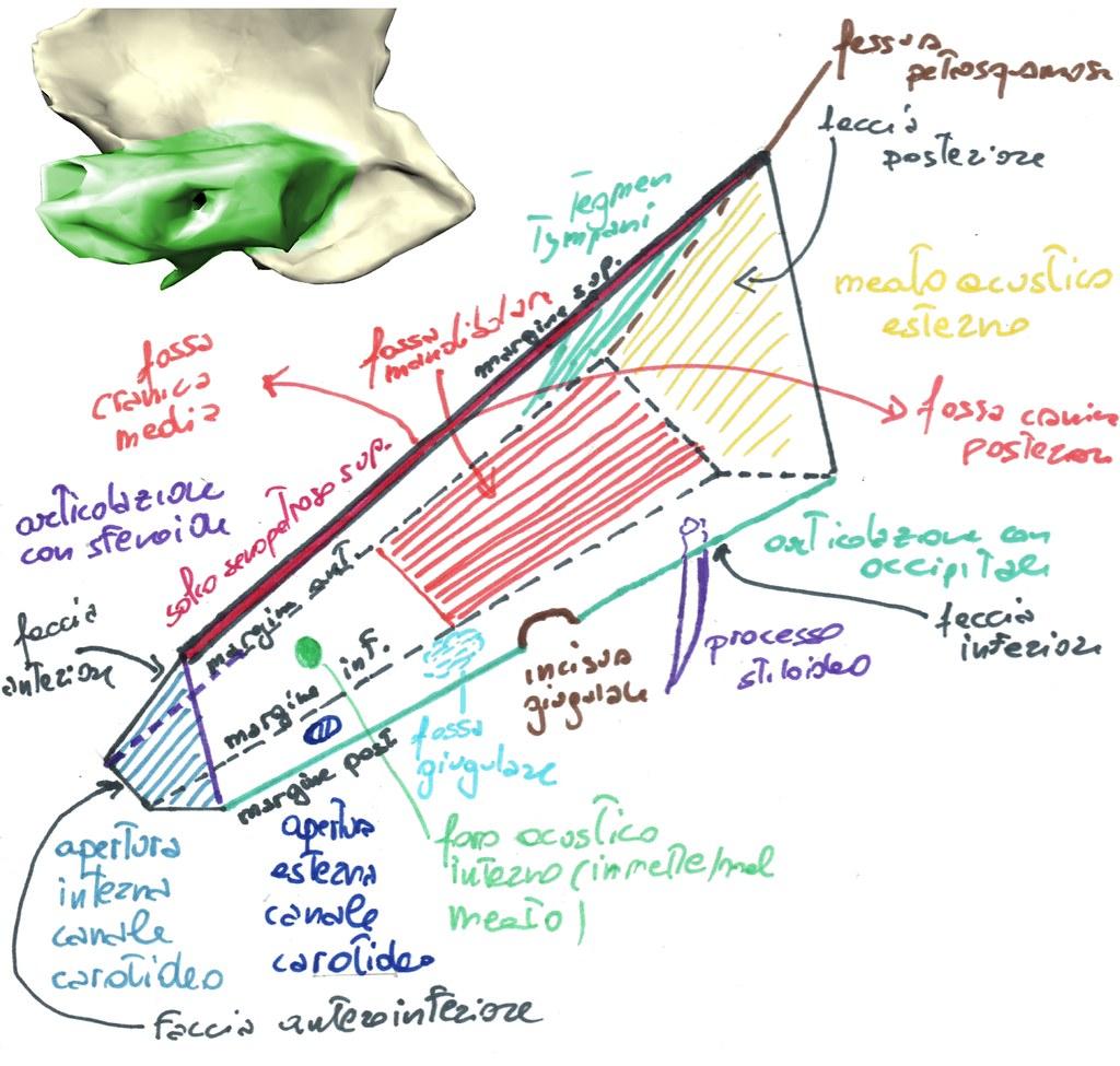 Faccia petrosa dell'osso temporale - schema   Schema delle c…   Flickr