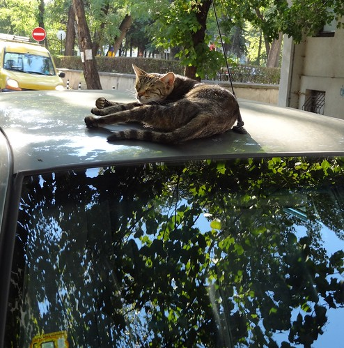 Cat N Car For Sale