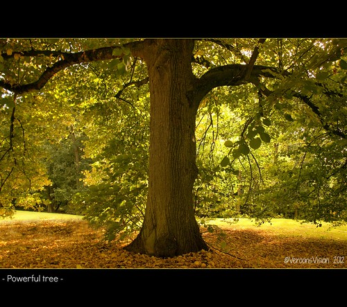 - Powerful tree- | by Veronica Van Peet | Photography