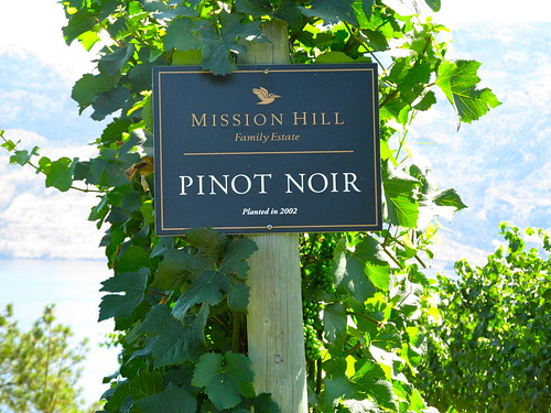 Misson Hill Pinot Noir grapes | by Beth77