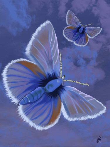 Butterflies | by JillySB