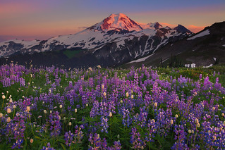 Mt Baker And Wildflowers | by kevin mcneal