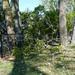 2012-09-04 - Storm Damage - 0007
