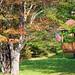 201209 Tree, flag-EA