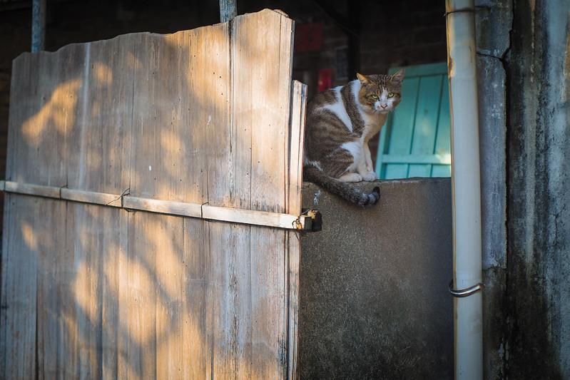 巷裡尋貓|PEN-F