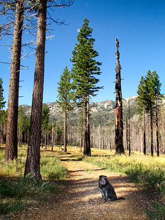 Angora Burn Area | by Sierra Springs Photography
