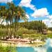 Flamingo Paradise!