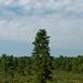 Pine Bush Preserve