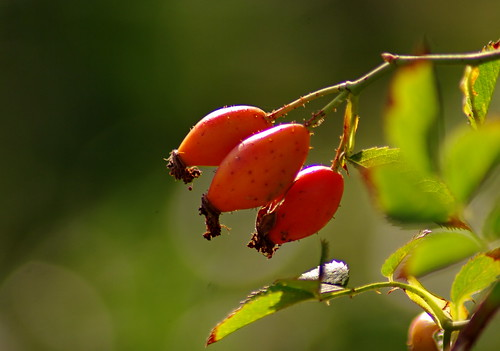 20120919 #07 | by Augustin BIRAU