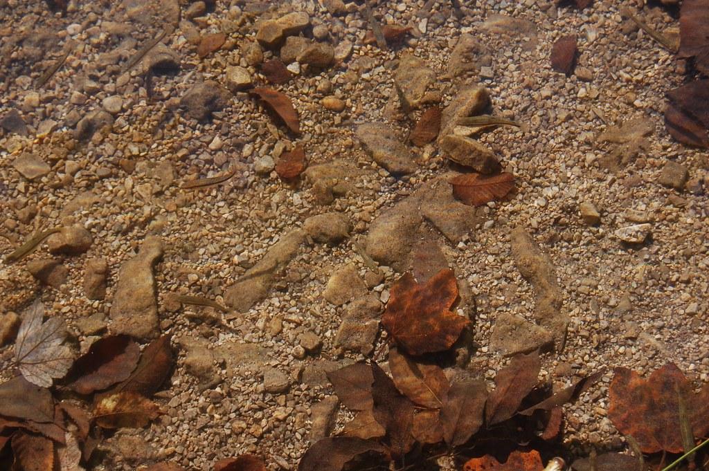 Agua transparente en Plitvice