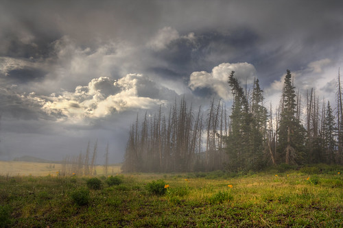 Mist over Cedar Breaks | by CharleneM50
