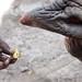 Black rhino 13