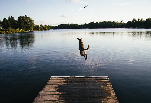 Dock Diving | by ryanmcgilchrist