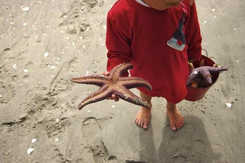 Hayden and his sea stars | by Annie Chubson
