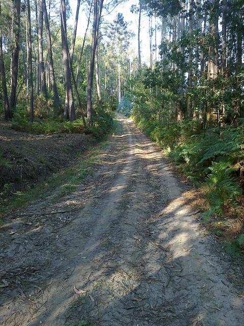 Pista Forestal en la Ruta do Bocelo