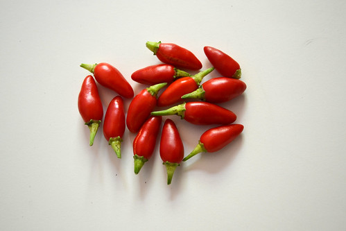 Prairie Fire Pequin Peppers | by Brooklyn Botanic Garden