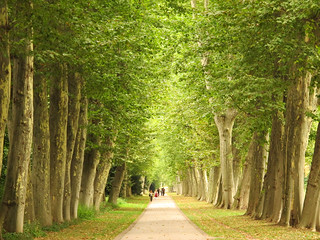 Plane Avenue in the Castle Park | by Habub3