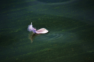 feather with water drops | by heartinhawaii