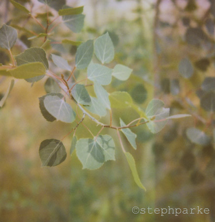 another aspen | by steph parke